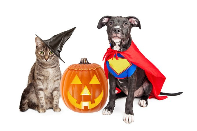 Image result for Halloween pet pictures