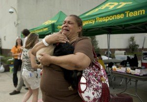 Keeping Pets Safe In A Natural Disaster