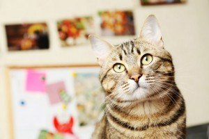 Did You Know? Amazing Cat Facts