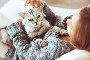 Kittens vs. Cats: How To Choose