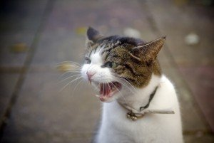 Causes Of Aggression In Cats