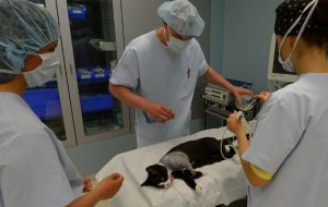 Cats And Skin Cancer