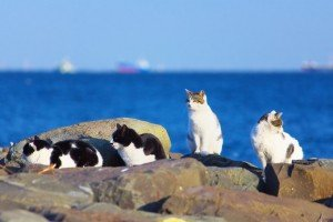 Feral Cats And Feral Cat Colonies