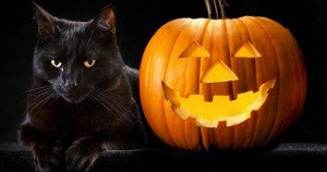 Black Cats: Halloween Hazards, Motivating Myths