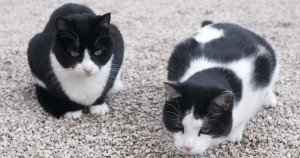 Black and white tuxedo cat names