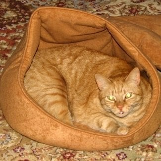 Petmate Hooded Cat Bed