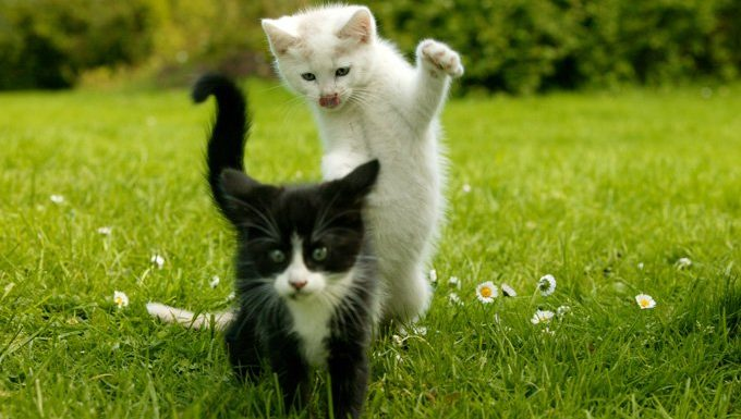 kittens playing in grass