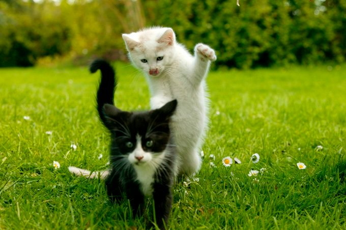 Why Kitten Socialization Is So Important Cattime