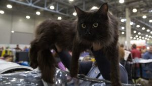 Know Your Cat Breeds: Largest, Smallest, Most Dog-Like, & More
