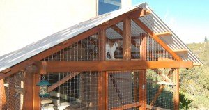 The catio: Safely giving your cat the outdoors