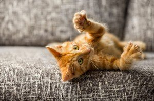 The Case For Indoor Cats