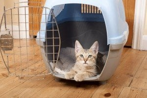 Cats And Carriers: The Ins And Outs