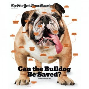 Sunday Edition New York Times: Can the Bulldog Be Saved?