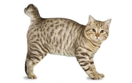 Cat Names For Bent Tail