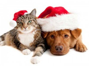Holiday survey results are in: celebrating with your pet