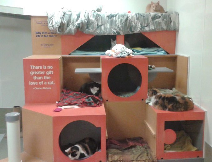 (Picture Credit: Tabby's Place Cat Rescue)