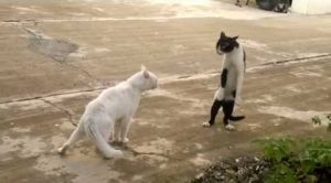 Cats Fighting Or Playing?