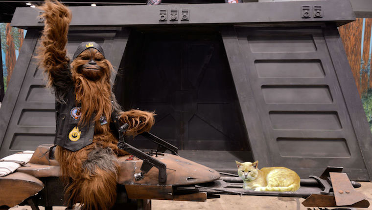 chewbacca riding speeder with cat