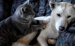 Cat Gives Dog A Rubdown [VIDEO]