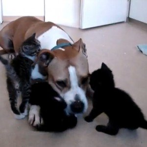 A dog and four kittens