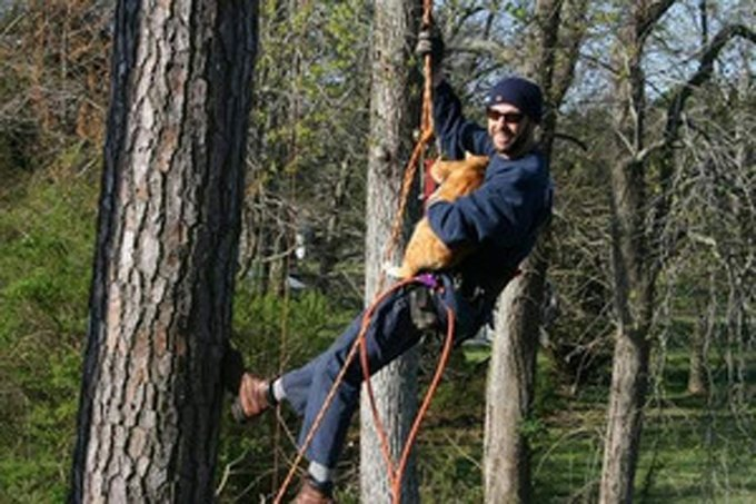 Robert Misuna, owner of Eastern Shore Tree care, carries Skeared Kitty to the ground. (Photo credit: Michael Stephano)