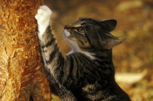 Why Does A Cat Need To Scratch?