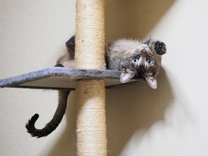shredded scratching posts are trophies for cats so donu0027t throw them away - Cat Scratching Post
