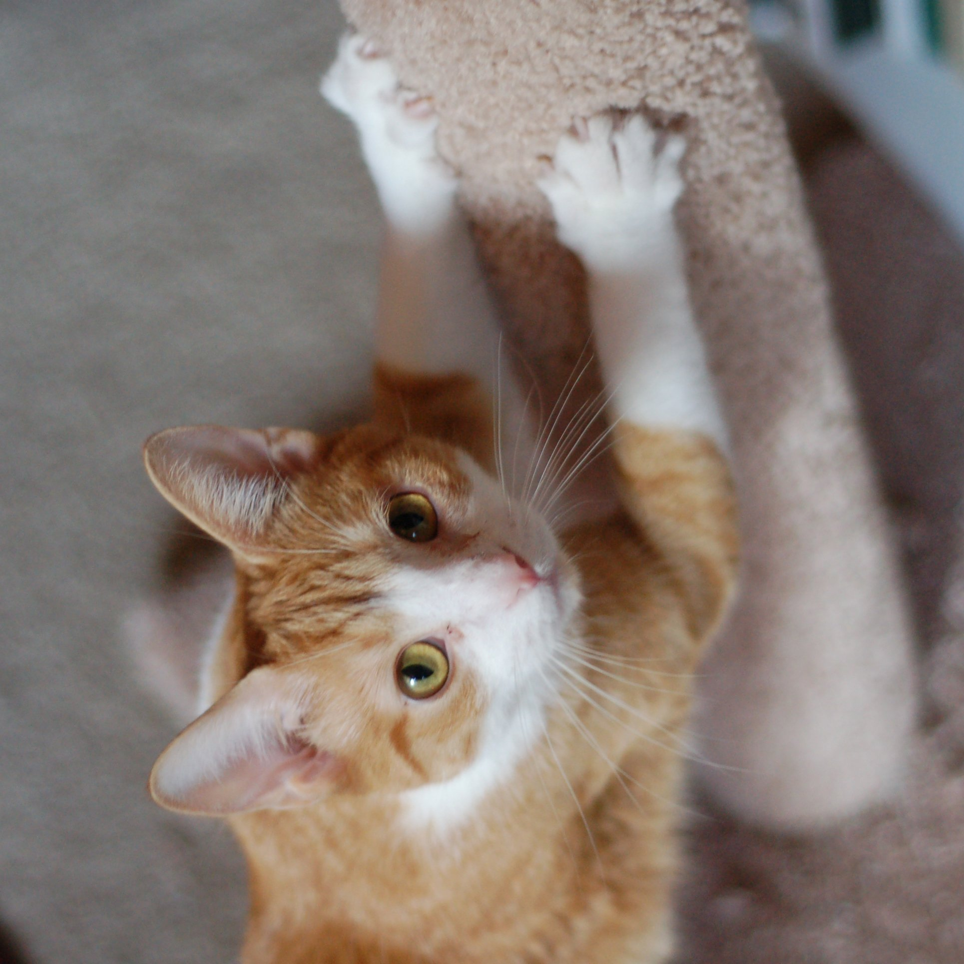 Cat Doesn T Use Scratching Post