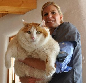 Meow, the 39-pound cat, is dead