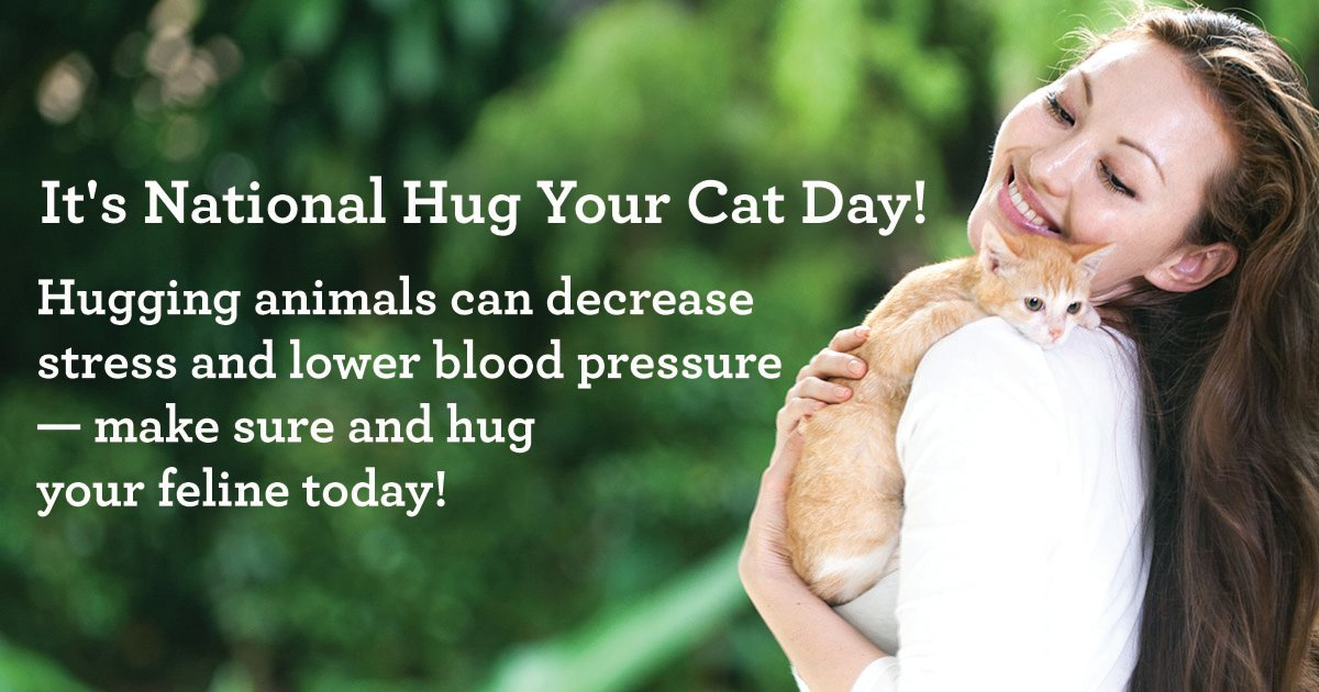 June 4 Is National Hug Your Cat Day Cattime