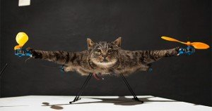 Remote-controlled cat-copter takes to the sky
