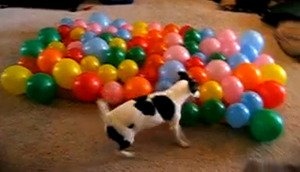 Five Cat and Dog Videos for Friday, June 15, 2012