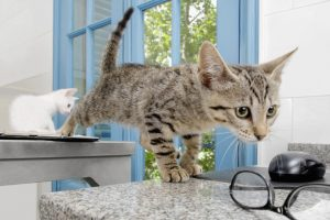 7 Things Pet Owners Do That Drive Veterinarians Crazy