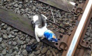 New York Conductor Saves Cat From Train Tracks