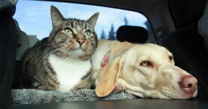 Road Trip: 7 Car Safety Tips For Dogs & Cats