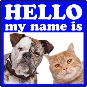 Top 100 weird pet names of 2011