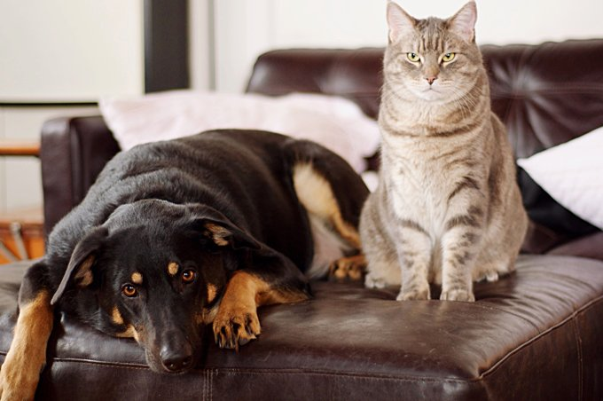 Oppressive stereotypes? Or is there really a difference between dog owners and cat owners? (Picture Credit: Getty Images)
