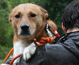 Animals of Hurricane Sandy: You can help
