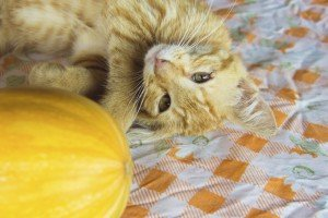 Top 5 Thanksgiving Tips For Cats And Cat Lovers