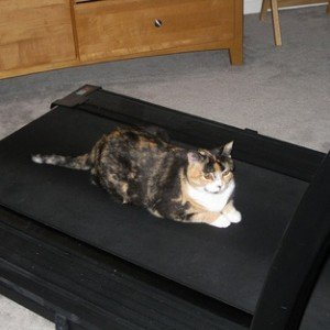 Cats on Treadmills: Resolution Motivation