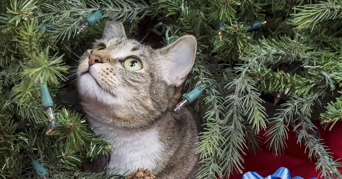Pet Safety Tips For Christmas Cattime