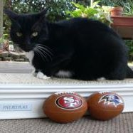 Cat predicts San Francisco 49ers lose Super Bowl