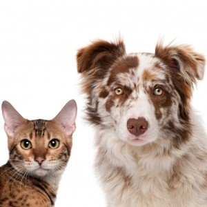 Best and worst states for animal protection laws in 2012
