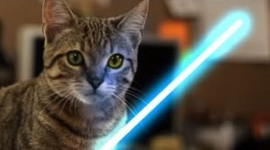 Kitten Uses The Force [STAR WARS VIDEO]