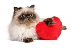 Valentine's Day Is A Big Holiday For Pet Owners