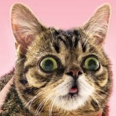 Internet celebrity cats get their due with 'Lil Bub'