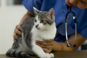 A Veterinarian's Tips On Keeping Medical Costs Down, Insurance Or Not