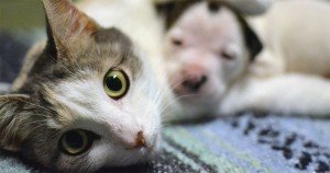 Mama Cat Nurses Pit Bull Pup [VIDEO]