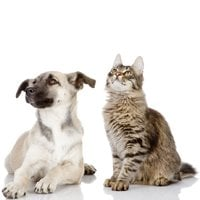 Plan now: Your pets and preparing for the unthinkable