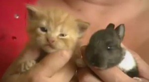Mama Cat Adopts Baby Bunny [VIDEO]